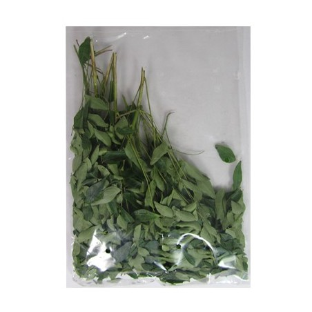 Curry Leaves Packed