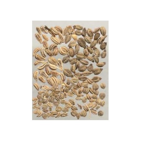 East End Ajwain Seeds 100g
